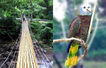 Tobago Insel Hopping 16 Tage ab 2.499 €