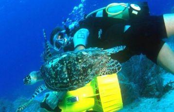 Guadeloupe Tauchreisen 7 Tage ab 0 €
