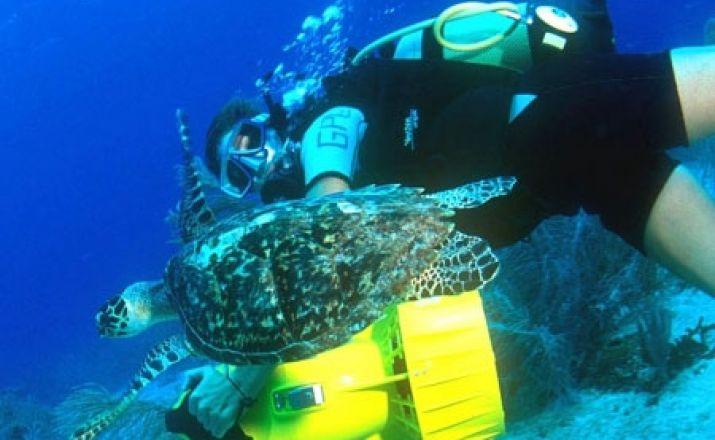 Dive & Drive Guadeloupe und Les Saintes - Tauchreise Libos Fertig Touristik 1