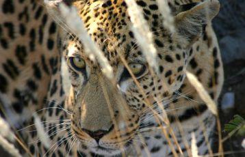 Namibia Safari Reisen 16 Tage ab 5.260 €