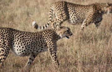 Südafrika Safari Reisen 16 Tage ab 3.395 €