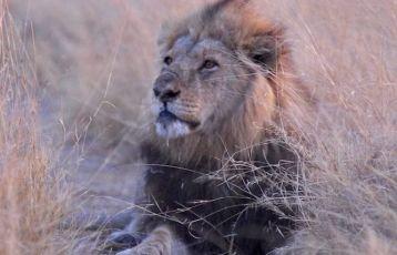 Botswana Safari Reisen 9 Tage ab 4.095 €